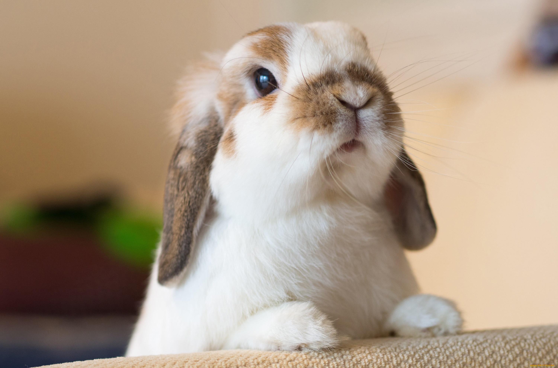 Животные  кролики